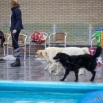 Honden is zwembad 'Haulewelle' [Haulerwijk]
